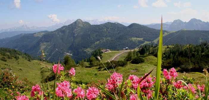 Gamskogel Zauchensee Wandern