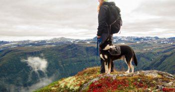 Wandern mit Hund? Traumurlaub mit dem Vierbeiner