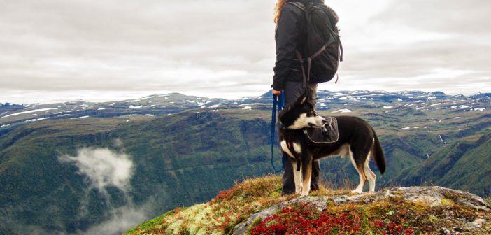 Hund Wandern Tipps